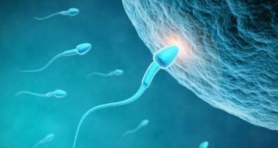 Healthy sperm: Improving your fertility